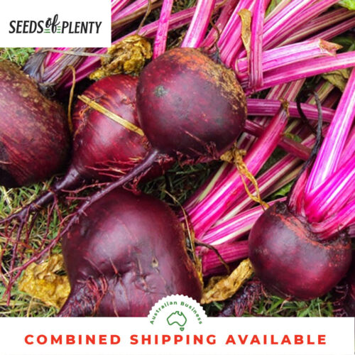 200 Seeds BEETROOT Early Wonder
