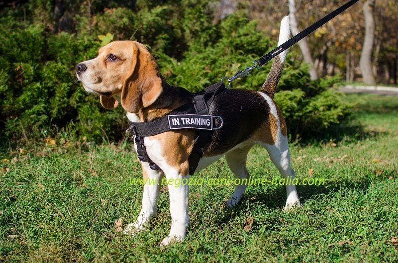 grande sconto Pettorina per per per cane, multifunzionale, con scritta personalizzata, in nylon  nuovi prodotti novità