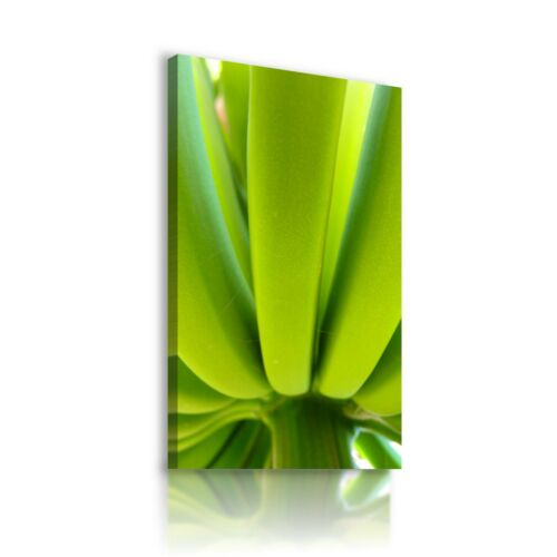 GREEN BANANAS FRUITS Canvas Wall Art Picture Large SIZES F7 MATAGA .