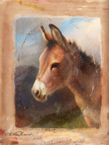 PAINTING ANIMAL PORTRAIT HUNT STUDY DONKEY ART PRINT POSTER LAH442A