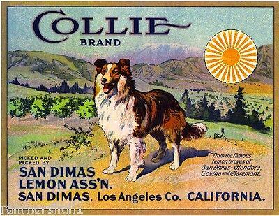 San Dimas Los Angeles Collie Dog #2 Lemon Citrus Fruit Crate Label Art Print