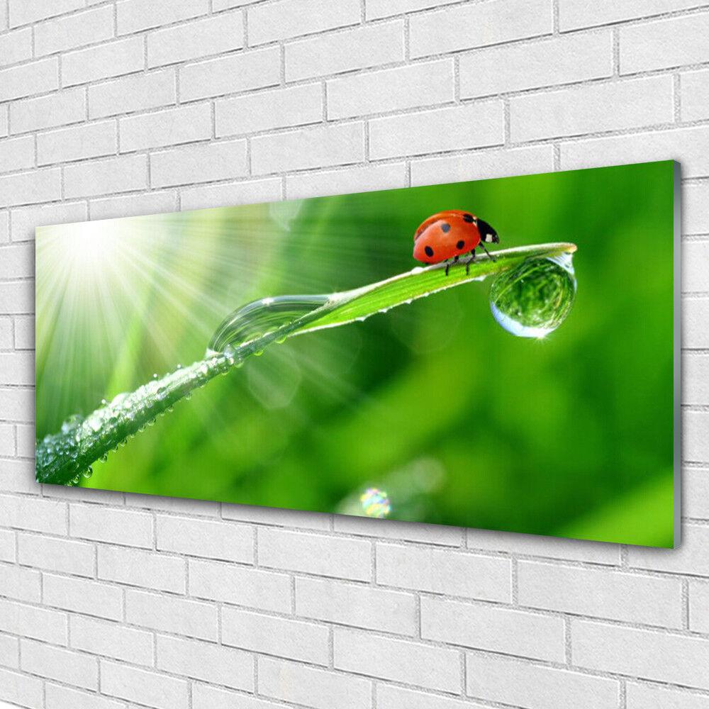 Tableau murale Impression sous verre 125x50 Nature Herbe Soleil Coccinelle