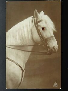 Horse-Theme-PORTRAIT-of-HORSE-with-Glass-Eye-c1920s-Novelty-Postcard-by-J-W