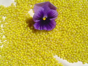 8-0-Old-Time-French-Glass-Greasy-Yellow-White-Heart-Crafts-Seed-Beads-1oz