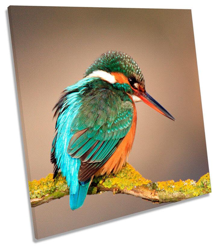 Pájaro Martín Pescador De Vida Silvestre Plaza Plaza Plaza tela parojo arte En Caja Enmarcado c094cc