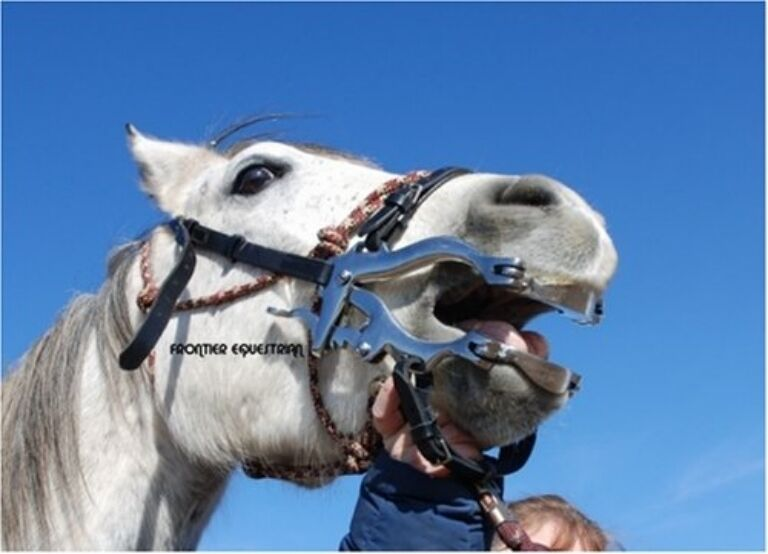 Mini miniature Horse   Stainless Steel  professional dental  mouth speculum NEW  enjoying your shopping