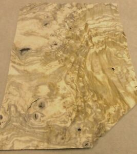 "Olive Ash Burl wood veneer 13/"" x 15/"" with no backing raw veneer 1//42/"" thick"