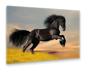 Postereck-Leinwand-0213-Schwarzes-Pferd-Rappe-Hengst-Tier-Reiten-Natur-frei