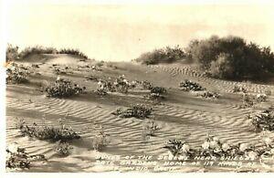 Desert Dunes Shileld's Date Gardens Indio California RPPC Real Photo Postcard