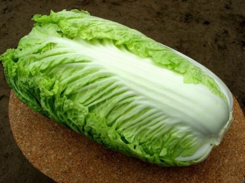 Chinesse Cabbage seeds Chinese giant Heirloom Vegetable Seeds early