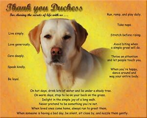 Details about Yellow Lab Dog Picture/Wall Art-Personalized w/Name-Unique  Dog Lover's Gift