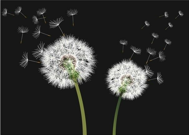 3D Dandelion Flying Paper Wall Print Wall Decal Wall Deco Indoor Wall Murals