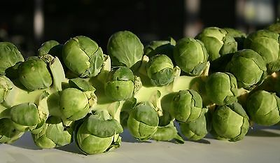 VEGETABLE  BRUSSEL SPROUT BRILLIANT F1   80 FINEST SEEDS