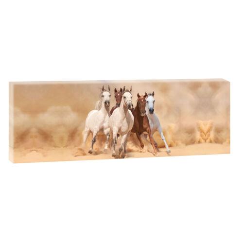 Wilde Pferde 2  Bild Leinwand Poster Modern Design Panorama  150 cm* 50 cm 684