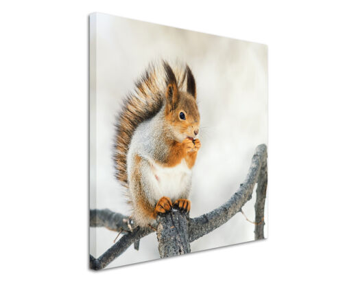 Patch Application squirrel on AST
