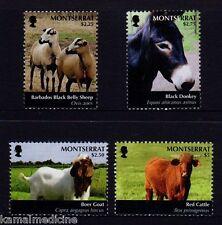 Black Donkey, Barbado Black Belly Sheep, Boer Goat, Montserrat MNH 4v - A01