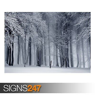 SNOWY FOREST WINTER AE027 NATURE POSTER Photo Poster Print Art * All Sizes
