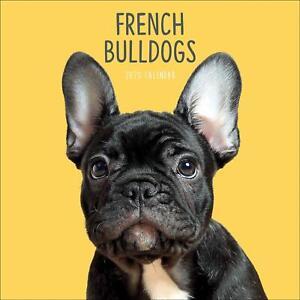 French-Bulldog-2020-Official-Square-Wall-Calendar