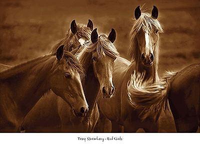 Bad Girls by Tony Stromberg Art Print Horse Western Decor Photo Poster 36x26