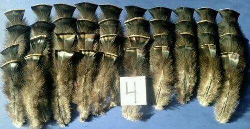 "Center Pieces /& Crafts Details about  /50 Wild Turkey Rump Feathers 4.5-8.5/"" FlyTying Arts"