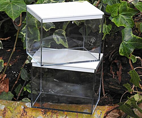 Mini-beast,Pond Dipping Plastic Observation Tanks With Free Spotter Cards