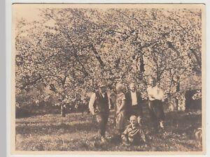 F30454-Orig-Foto-Personen-unter-bluehenden-Baum-in-Neuhof-1928