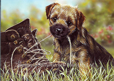 Border Terrier Dog, Christmas cards bargain of 10 by Paul Doyle. C80X