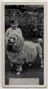 Poodle-Dog-With-Young-Child-1930s-Ad-Trade-Card