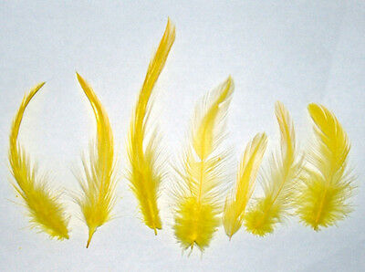 "YELLOW Rooster Hackle Feathers 2-6"" Dyed Loose 7 gram bag Approx 150 count"