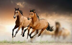 Image is loading Wild-Horse-wallpaper-Elegant-High-Quality-wall-Art-