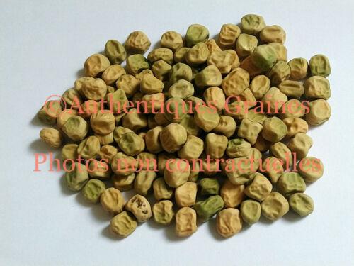 20//40 Semi Pisello Piccola Dolce Tendre Eccellente Freezer Prolifique