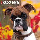 Boxers Calendar 2017 Willow Creek Press 9781682340356