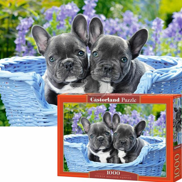 Castorland Jigsaw 1000pc - French Bulldog Puppies