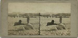 Egitto-Statue-Fotografia-Stereo-Vintage-Albumina-Ca-1860