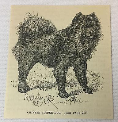 2019 Neuer Stil 1886 Zeitschrift Gravur ~ Schwarz Chinesische Essbarer Hund Phantasie Farben