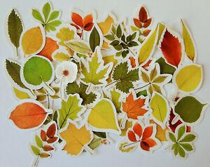 46-Herbstlaub-Blaetter-Blatt-Spaetsommer-Aufkleber-Sticker-Scrapbooking-basteln