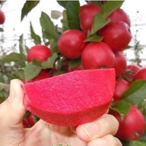 10pcs Rare Red Meat Bonsai Tree Seeds Garden Yard Sweet Fruit Plant Seed