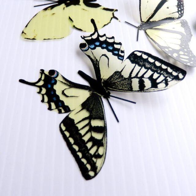 12 Pack Butterflies - Cheesecake - 5 to 6 cm - Topper, Weddings, Crafts, Cards,