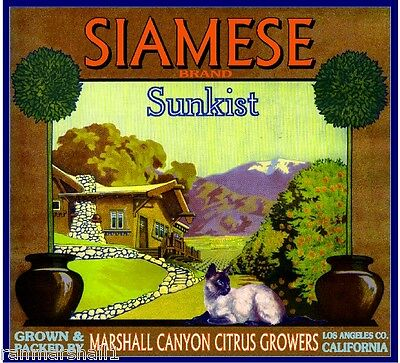 Marshall Canyon Siamese Cat #1 Kitten Orange Citrus Fruit Crate Label Art Print
