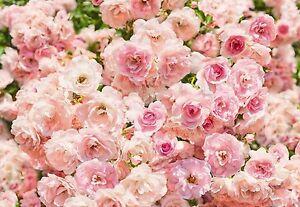 Gigante-Papel-pintado-para-dormitorio-368x254cm-Flores-Rosas-Mural-Pared-Arte