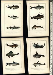 Fish-Poissons-lovely-c-1830-039-s-display-collection-8-fine-old-hand-colored-prints