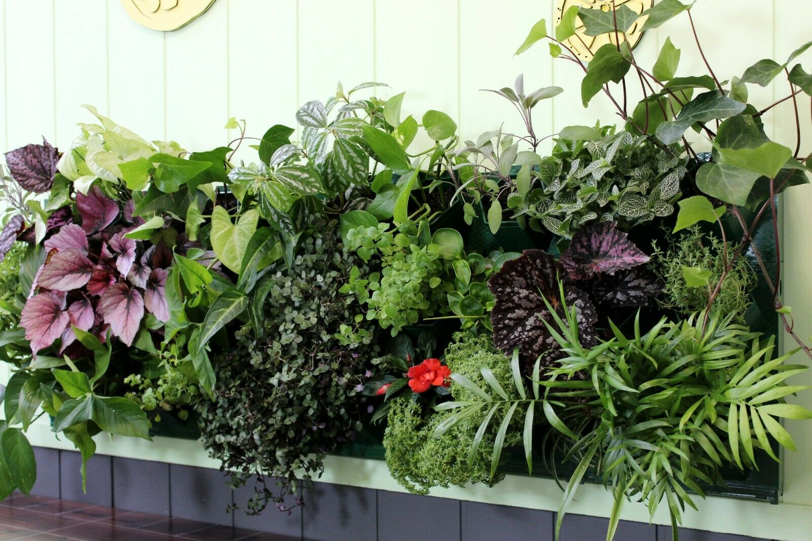 Self Watering Planter For Vertical Gardens Indoor Outdoor Wall Decor Kit For Sale Online Ebay