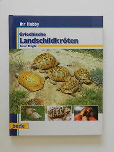 Griechische-Landschildkroeten-Rainer-Zirngibl-Schildkroeten