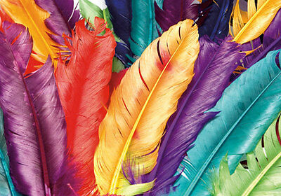 Dyed Colorful Feathers Graphic 3D Full Wall Mural Photo Wallpaper Home Decal Kid