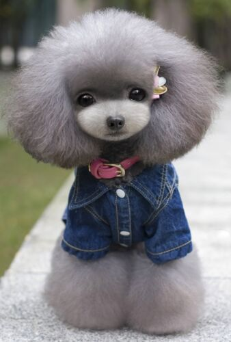 jeans chat Animal costume xxl vêtements vêtements mode s chien veste denim bleu TqCgHwCI