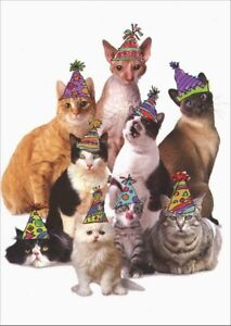 Image Is Loading Cats In Party Hats Graphique De France Birthday