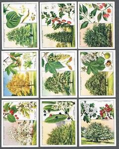 1937-Wills-s-Cigarettes-Trees-Large-Tobacco-Cards-Complete-Set-of-40
