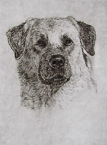 GEOFFREY-LASKO-ANATOLIAN-SHEPHERD-DOG-LISTED-ARTIST-ETCHING-S-amp-N-FREE-SHIP