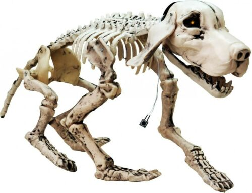 71x40x25cm EUROPALMS Halloween Hundeskelett