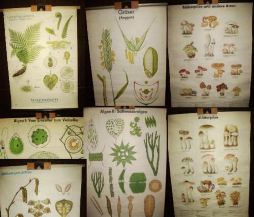 1 Stück auswählen alte Rollkarte Pilze Pflanzen Gräser Farn Algen Moos Wald 5.